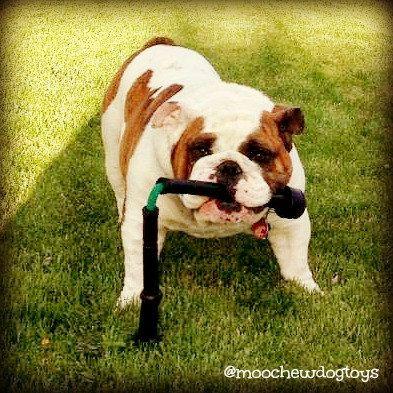 Ruff's Moochucks Dog Tug Toy / Gift for Dog Lovers by Moochews, $20.00