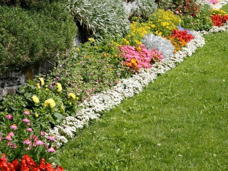 Landscaping Edging Plants : Garden flower boarders border plants can add the wow factor into