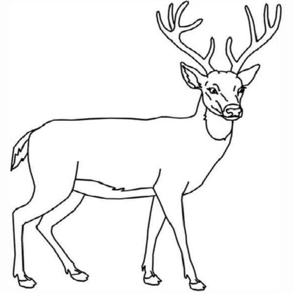 Deer head coloring pages coloring pages for Deer coloring page