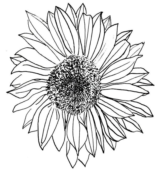 Line Drawing Sunflower Tattoo : Sunflower drawing tattoos pinterest