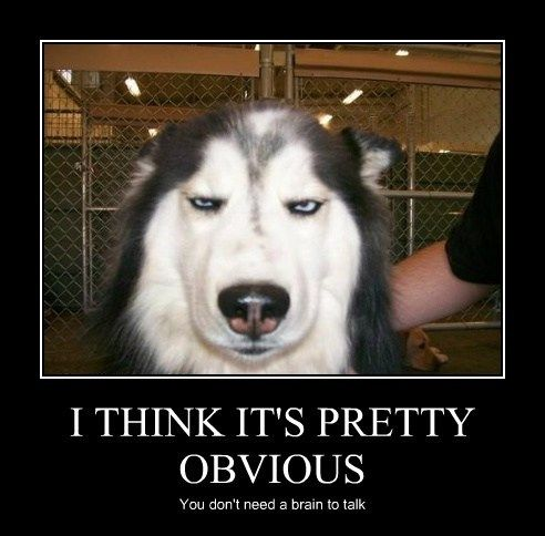 disappointed husky - photo #3