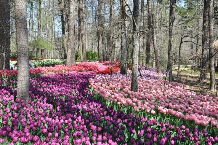 Garvan Woodland Gardens Garvan Woodland Gardens Pinterest