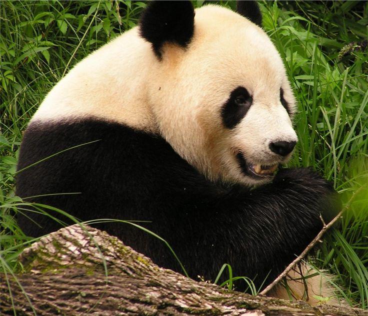 Top 10 Endangered Species 2012