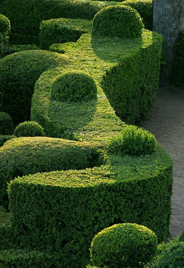 Choosing the best plants for hedges garden yard for Garden design ideas with hedges