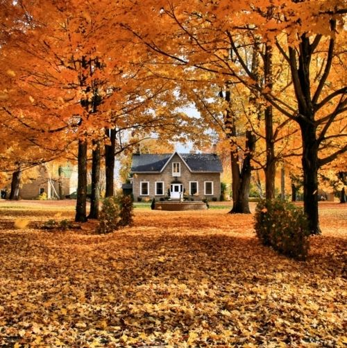 cottage, fall