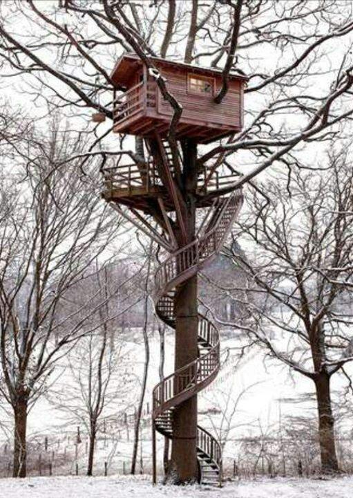 Amazing Tree House Trees Pinterest