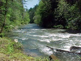 Pinterest for Georgia trout fishing map