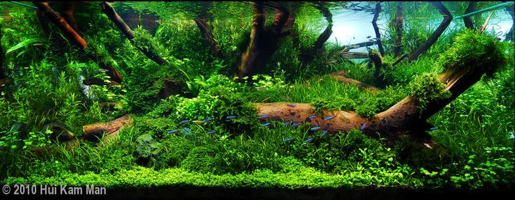 2010 AGA Aquascaping Contest - Entry #91 planted tank Pinterest