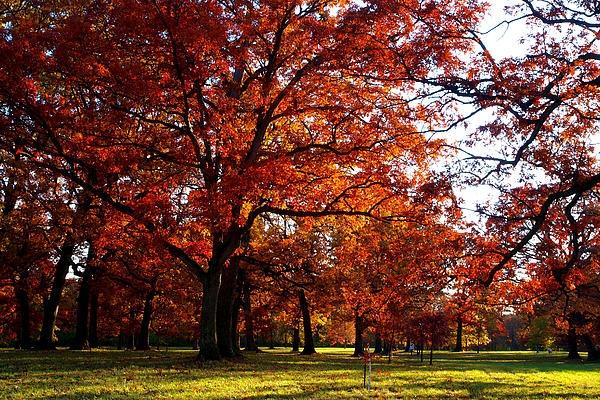 Morton Arboretum in colorful fall