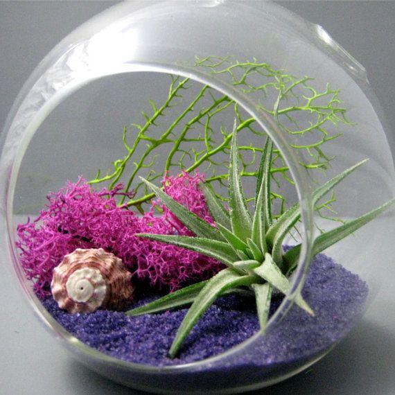Fuchsia Purple Air Plant Terrarium by seaandasters on Etsy, $25.00