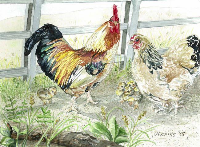 ... Rooster, Hen & Chicks Art Prints by Virginia & Ken Harris - Shop