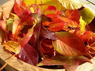 autumn leaves dipped in beeswax