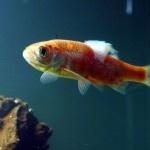 Common aquarium fish diseases pet tips pinterest for Tropical fish diseases
