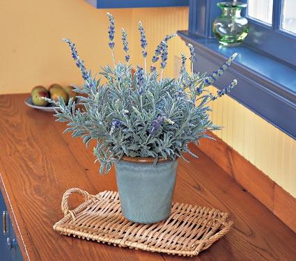 lavendar goodwin creek grey