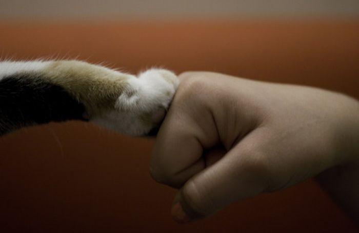 cat smacks dog