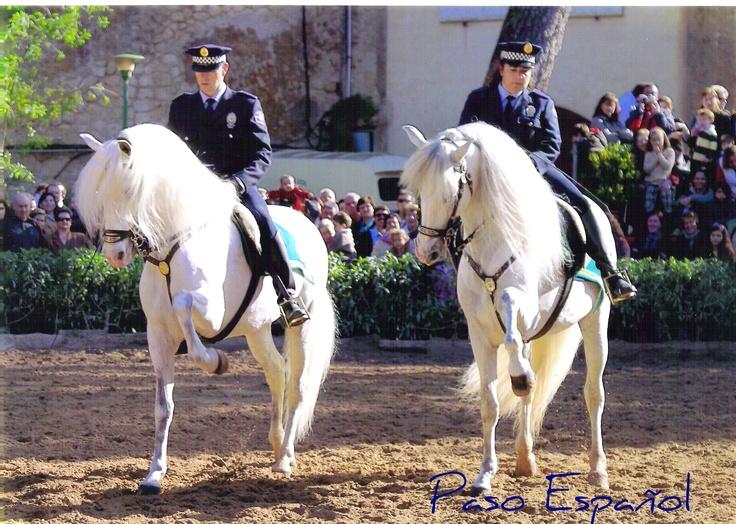 Paso español de PRE  Policía montada Palma  Mallorca  Spain