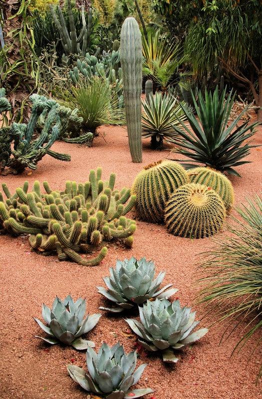 cacti garden Landscape Pinterest