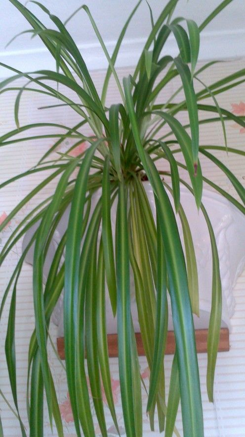 Indoor house plants with names and pictures - House plant names with pictures ...