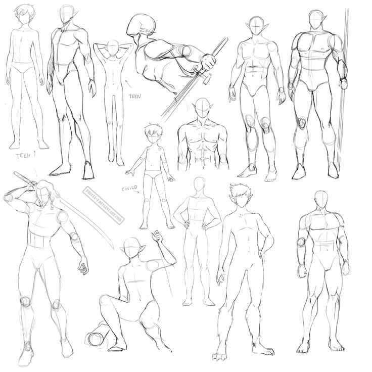 Drawing male anatomy