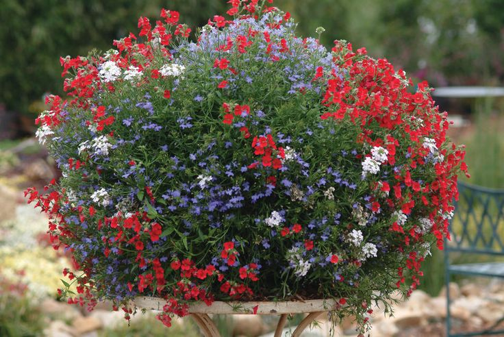 Hanging Flower Baskets In Full Sun : Hanging basket for full sun plants flowers