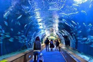 Valencia aquarium places I ve been Pinterest