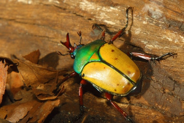 colorful | beetle | ***** COLORFUL ANIMALS ***** | Pinterest