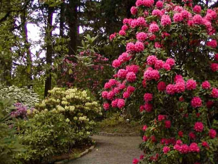 Portland Or Crystal Springs Rhododendron Garden Pinterest