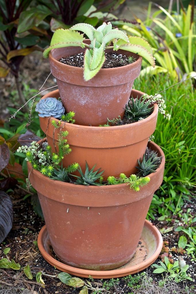 Cute Succulent Pots 28 Images Lovely Whale Ceramic