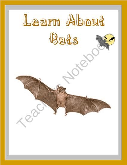 writing activities about bats