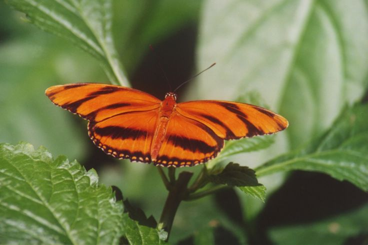 butterfly niagara falls butterfly conservatory. Black Bedroom Furniture Sets. Home Design Ideas