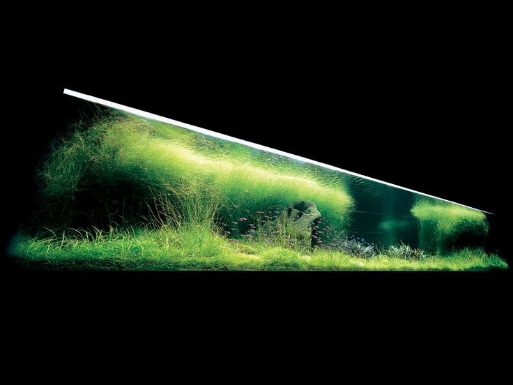 Nature aquarium by Takashi Amano Fish Tanks Pinterest