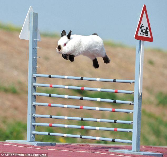 flying bunnies