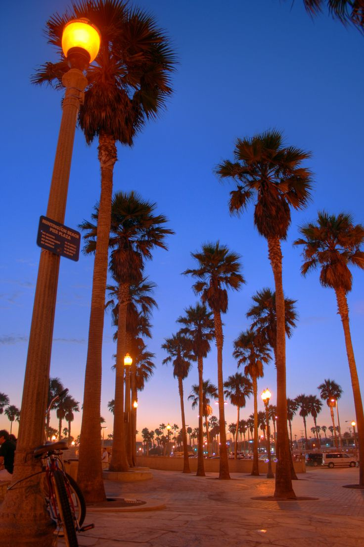 palm trees huntington beach