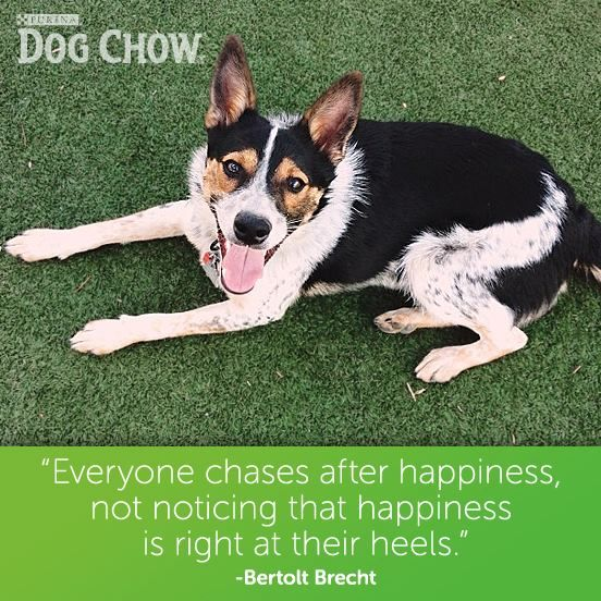 Dogs = happiness #dog #smile #happy