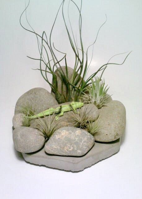 Pin by hailey 39 s garden on garden ideas pinterest for Air plant holder ideas