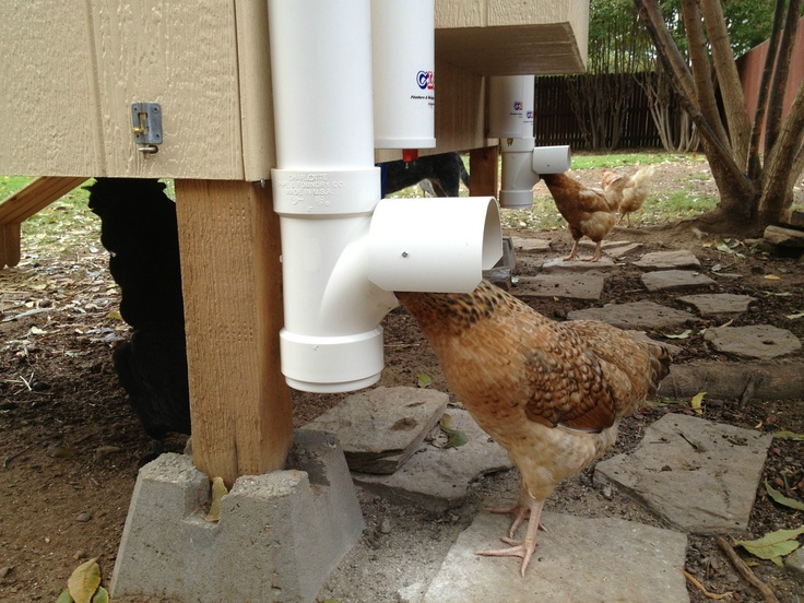 Clean chicken feeder for poultry for Pvc chicken waterer plans