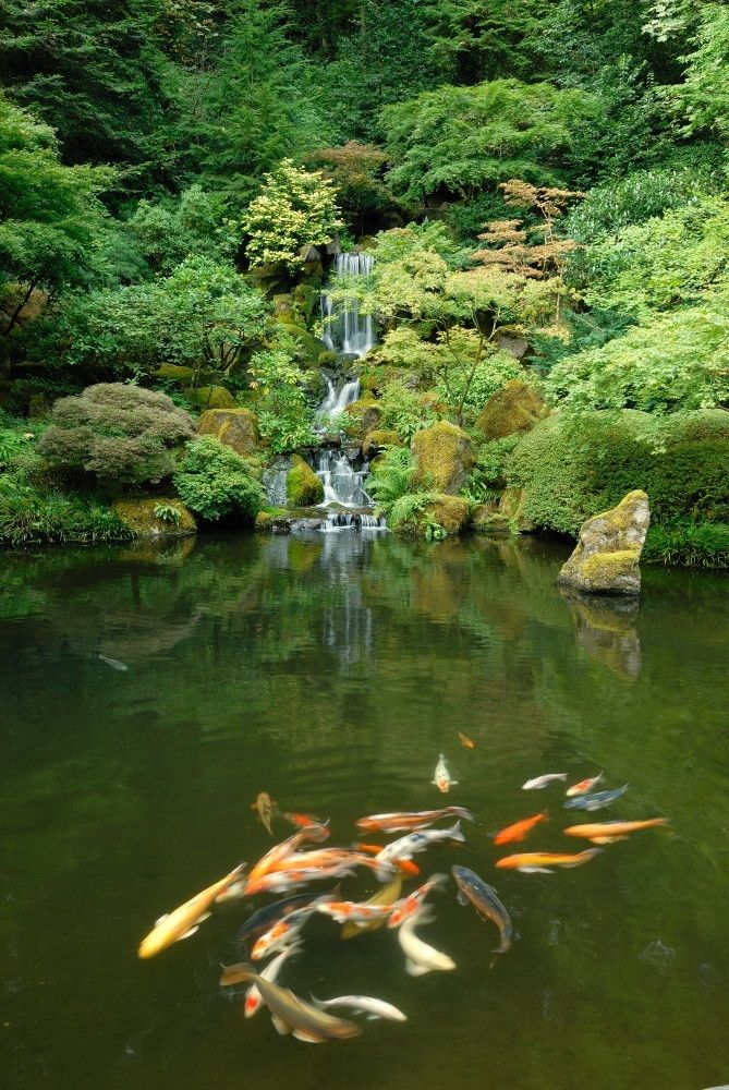 Japanese garden koi pond home outside ideas pinterest for Koi water garden