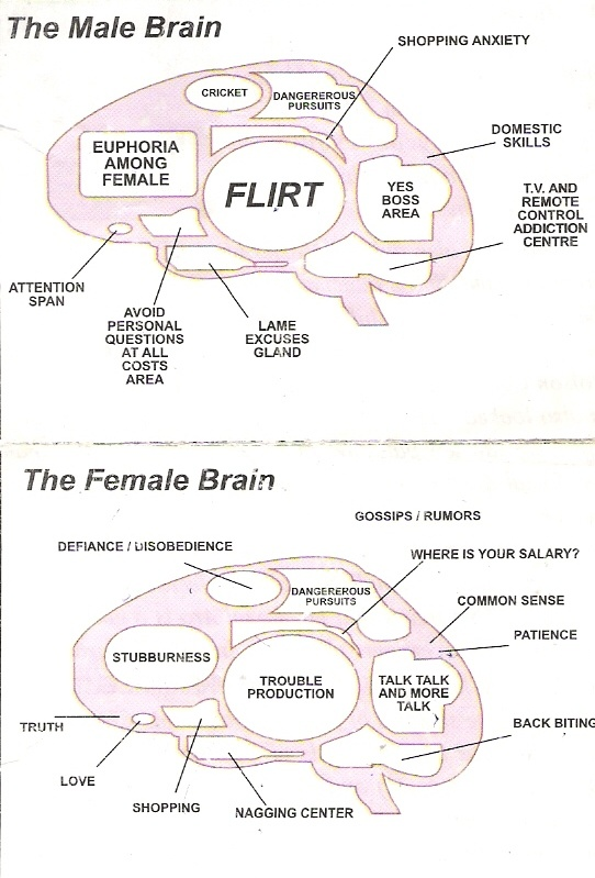 differences in the male and female brain As previously mentioned, there is an established size difference between male and female brains male brains tend to be bigger overall than female ones  this is also true for male legs, torsos.
