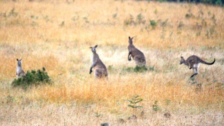 Buckland Australia  City pictures : Buckland River, Victoria, Australia | Places to visit again! | Pinter ...