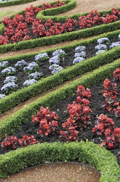 How to plant green velvet boxwood bushes for Green bushes for landscaping