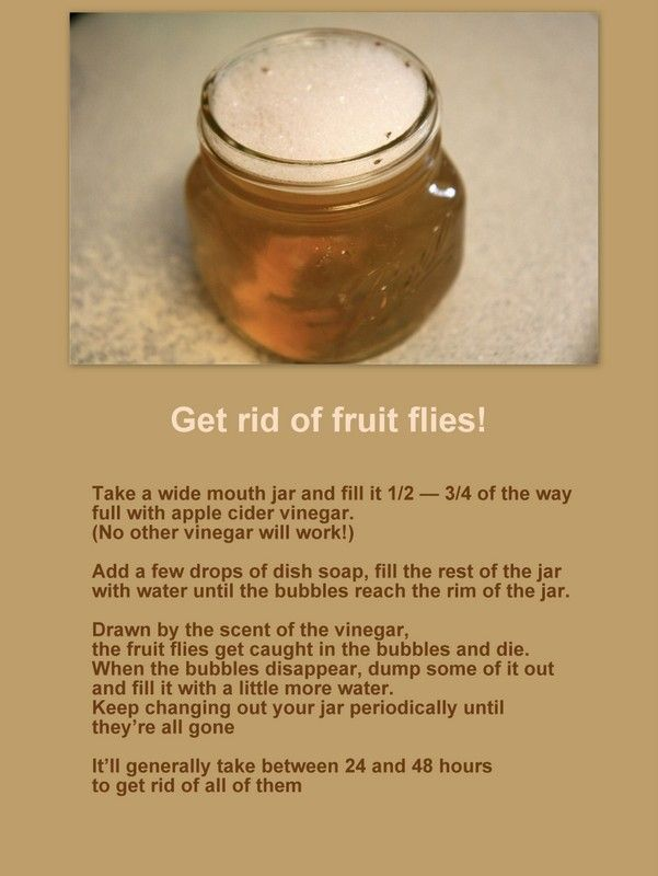stinky fruit get rid of fruit flies