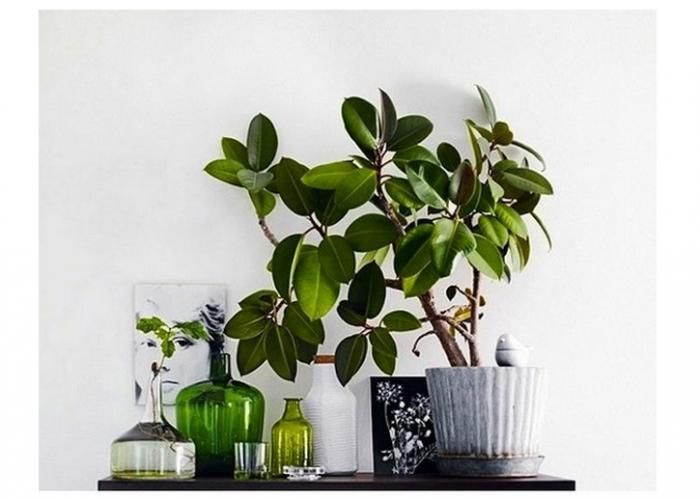 Great arrangement indoor plants houseplants pinterest - Nice indoor plants ...
