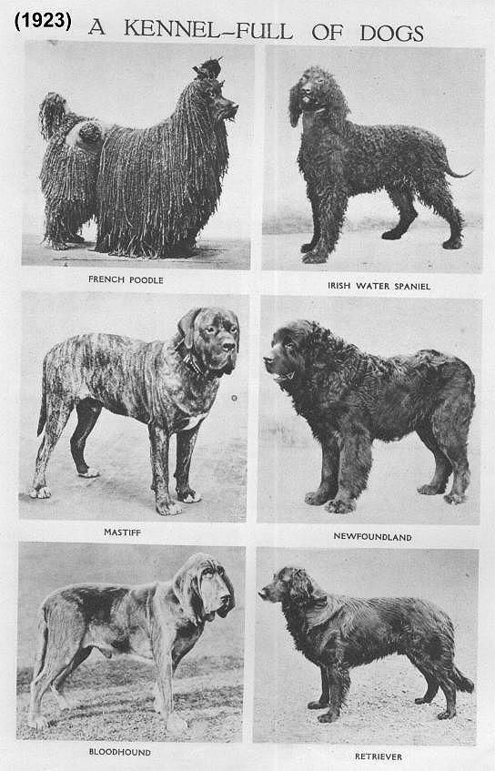 DOG BREEDS IN 1923 | W 1923 W | Pinterest