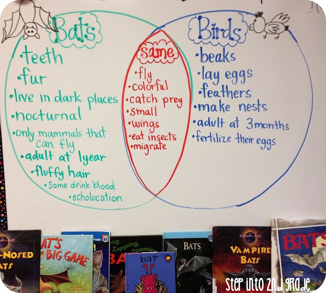 Venn Diagram Bats And Birds Vatozozdevelopment