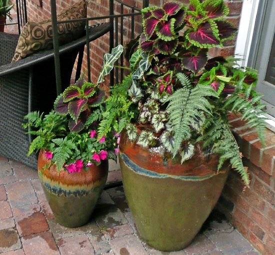 Shade container plants summer pinterest - Container gardens for shade ...