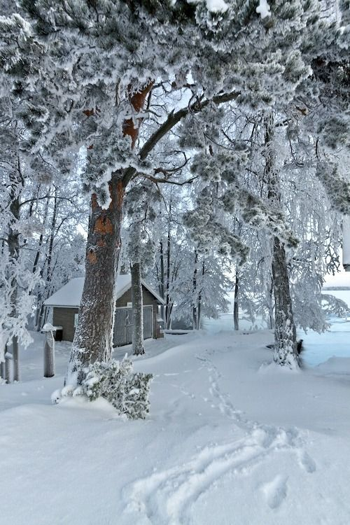 Beautiful snowy scene winter pinterest Beautiful snowfall pictures