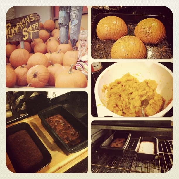 Paleo pumpkin bread | for my sweet tooth | Pinterest