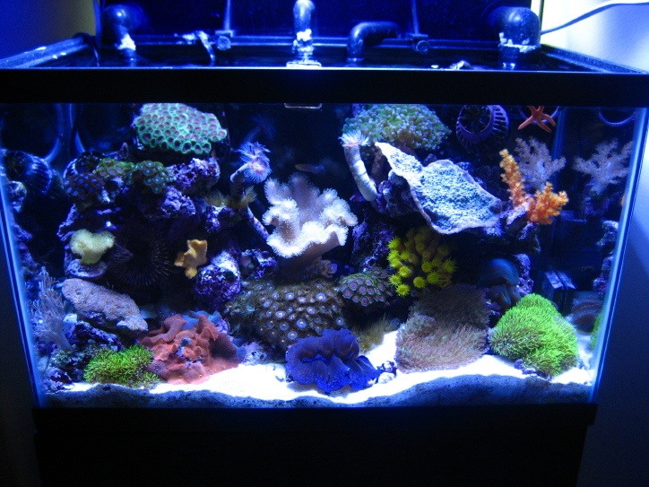 Another 10 gallon aquariums pinterest for 20 gallon saltwater fish tank