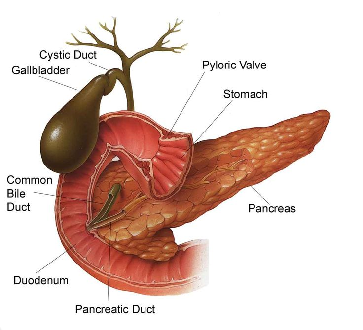 Pancreas Function And Location Where is The Pancreas Located