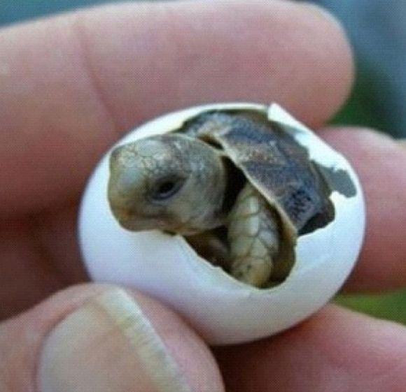 BABY TURTLES!!!!!